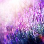 Provence landscape
